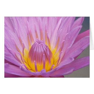 Pink Waterlily Notecard