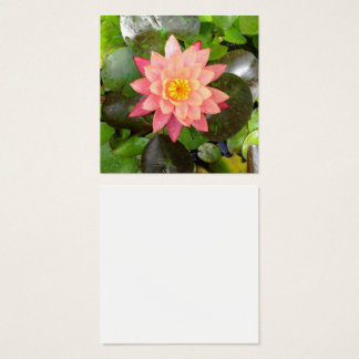 Pink waterlily photo square business card