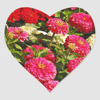 Pink, white and red zinnia flowers heart sticker