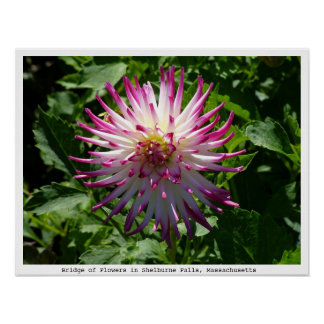 Pink-White Spikey Flower on the Bridge of Flowers Posters