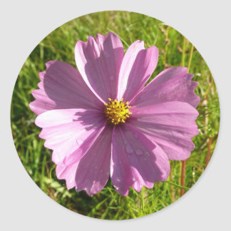 Pink Wildflower Classic Round Sticker