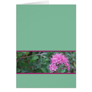 Pink Wildflower Greeting Card