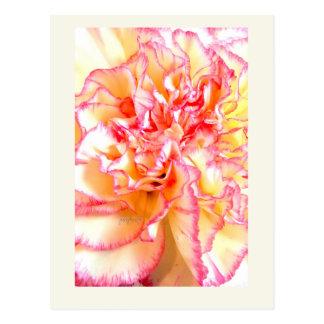 Pink & Yellow Easter Carnation jjhelene postcard