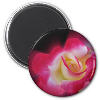 pink yellow rose 2 inch round magnet