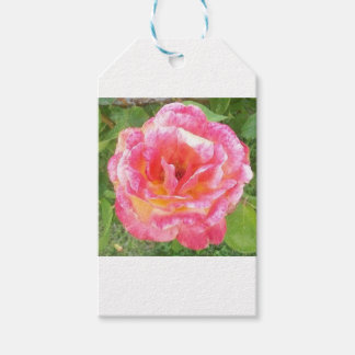 Pink & Yellow Spotted Rose Gift Tags