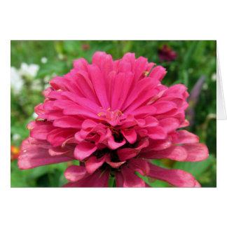 Pink Zinnia  - Birthday Card
