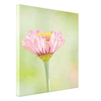 Pink Zinnia Flower Canvas Print