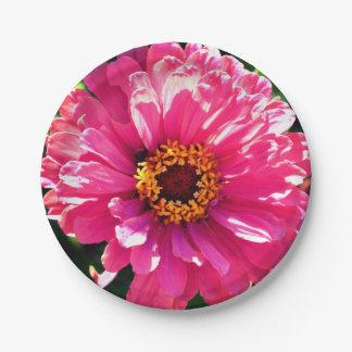 Pink Zinnia Paper Plate