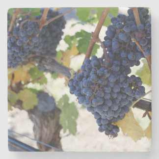 pinot noir grapes stone coaster