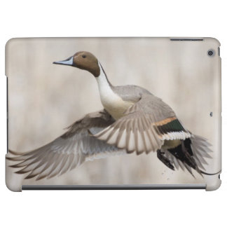 Pintail Drake Taking Flight iPad Air Cases
