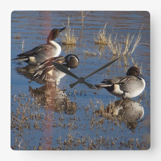 Pintail Duck Birds Wildlife Animals Wall Clock