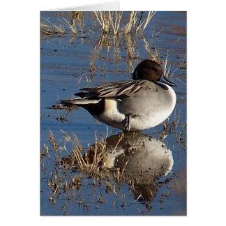 Pintail Duck Card