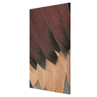 Pintail Duck Feather Design Canvas Print