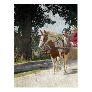Pinto and children in buggy postcard