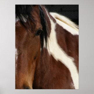 Pinto horse poster