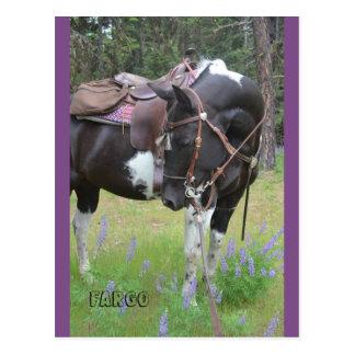Pinto mare Fargo horse post card