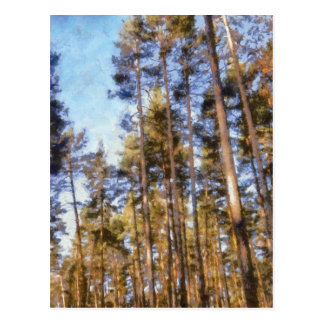 Piny forest postcard