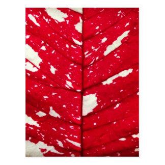 Pionsettia Leaf Texture Postcard