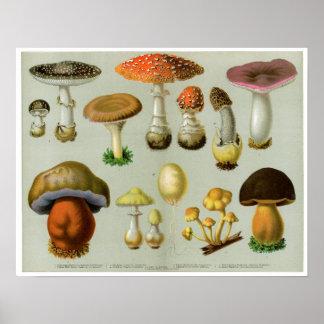 Piosonous Fungi - Mushrooms and Toadstools Poster