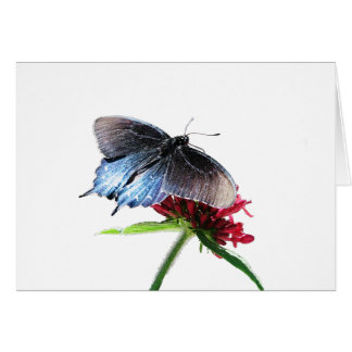 Pipevine Swallowtail Butterfly Card