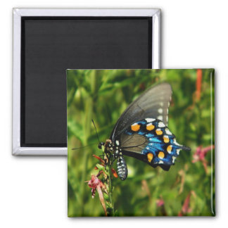 pipevine swallowtail magnet