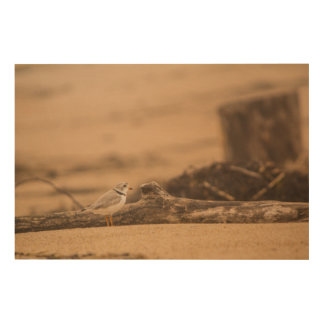 """Piping Plover 36""""x24"""" Wood Wall Art"""
