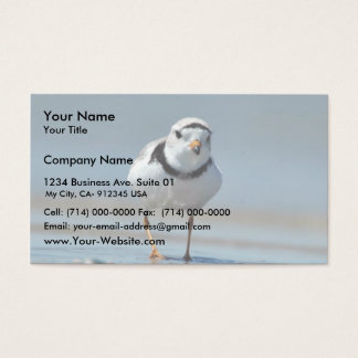 Piping Plover Business Card