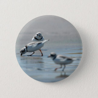 Piping Plovers eating on the beach 2 Inch Round Button