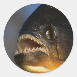 Piranha Close-Up Classic Round Sticker