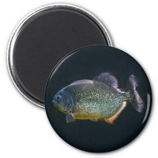 Piranha Magnet