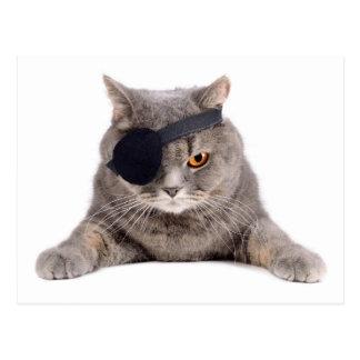 Pirate Cat Postcard