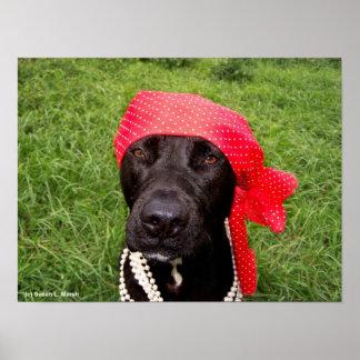 Pirate dog, black lab, red hankerchief green grass poster