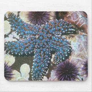 Pisaster Giganteus Starfish Mouse Pad