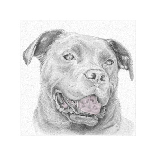 Pit Bull Art Drawing Canvas Print