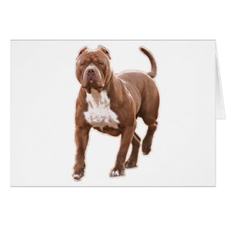 Pit bull brown card