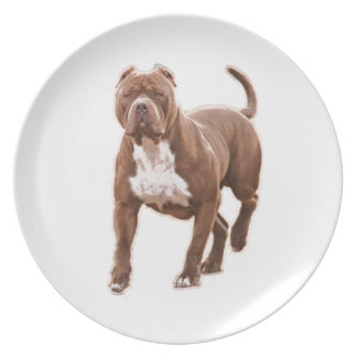 Pit bull brown dinner plates