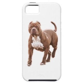 Pit bull brown iPhone 5 case