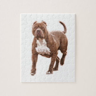 Pit bull brown jigsaw puzzle