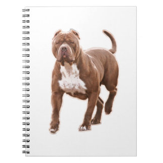 Pit bull brown notebooks