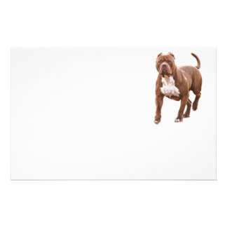 Pit bull brown stationery paper
