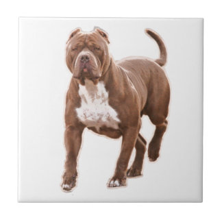 Pit bull brown tile