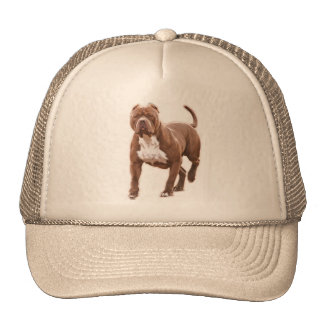 Pit bull brown trucker hat