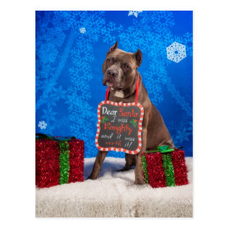 Pit-Bull Christmas Postcard