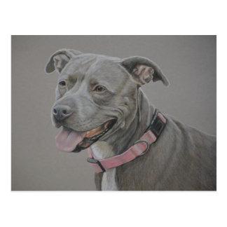 Pit Bull Dog Art Postcard
