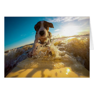 Pit Bull Dog Surfing Card