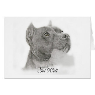 Pit Bull Get Well Card