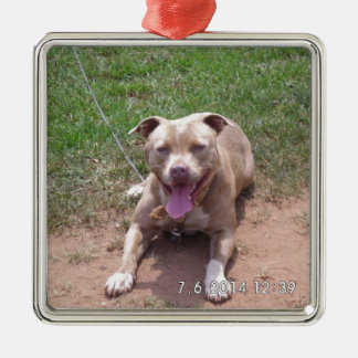 Pit Bull Products Silver-Colored Square Ornament