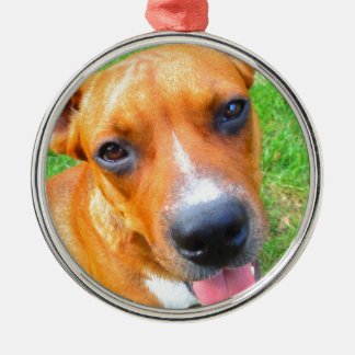 Pit Bull Puppy Close-up Silver-Colored Round Ornament