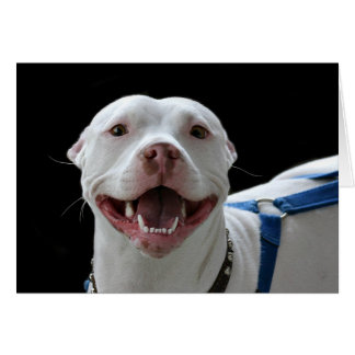 Pit bull smiling card