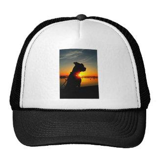 Pit Bull Sunrise Hat